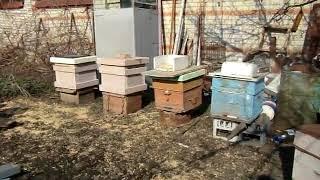 Пчеловод  и устав караульной   службы