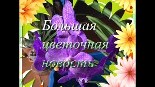 Размножение орхидеи ВАНДЫ или Большая Цветочная Новость(This video is about Размножение Ванды В этом видео я расскажу о моем последнем эксперименте по размножению орхидеи..., 2016-05-13T17:07:58.000Z)