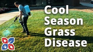 Do My Own Lawn Care  -  Cool Season Grass Disease
