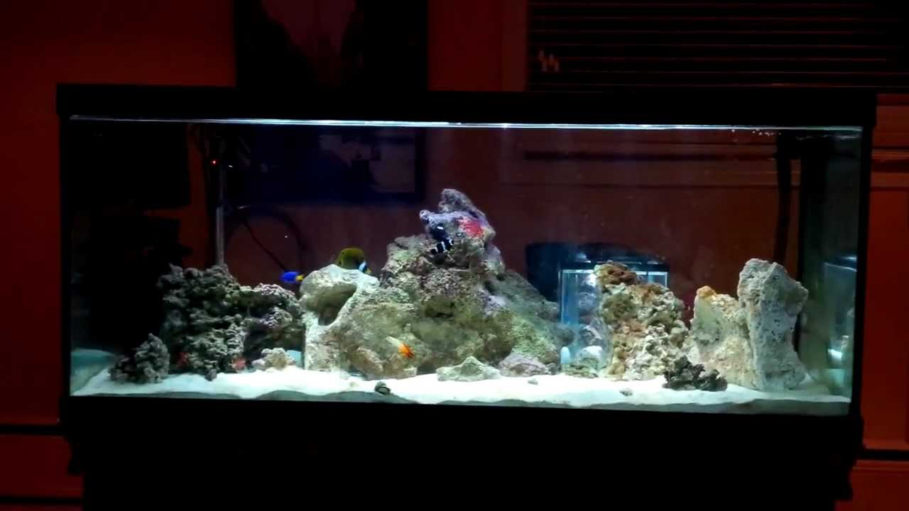 80 gallon saltwater fish only tank nano reef set up hd for Fish only saltwater tank