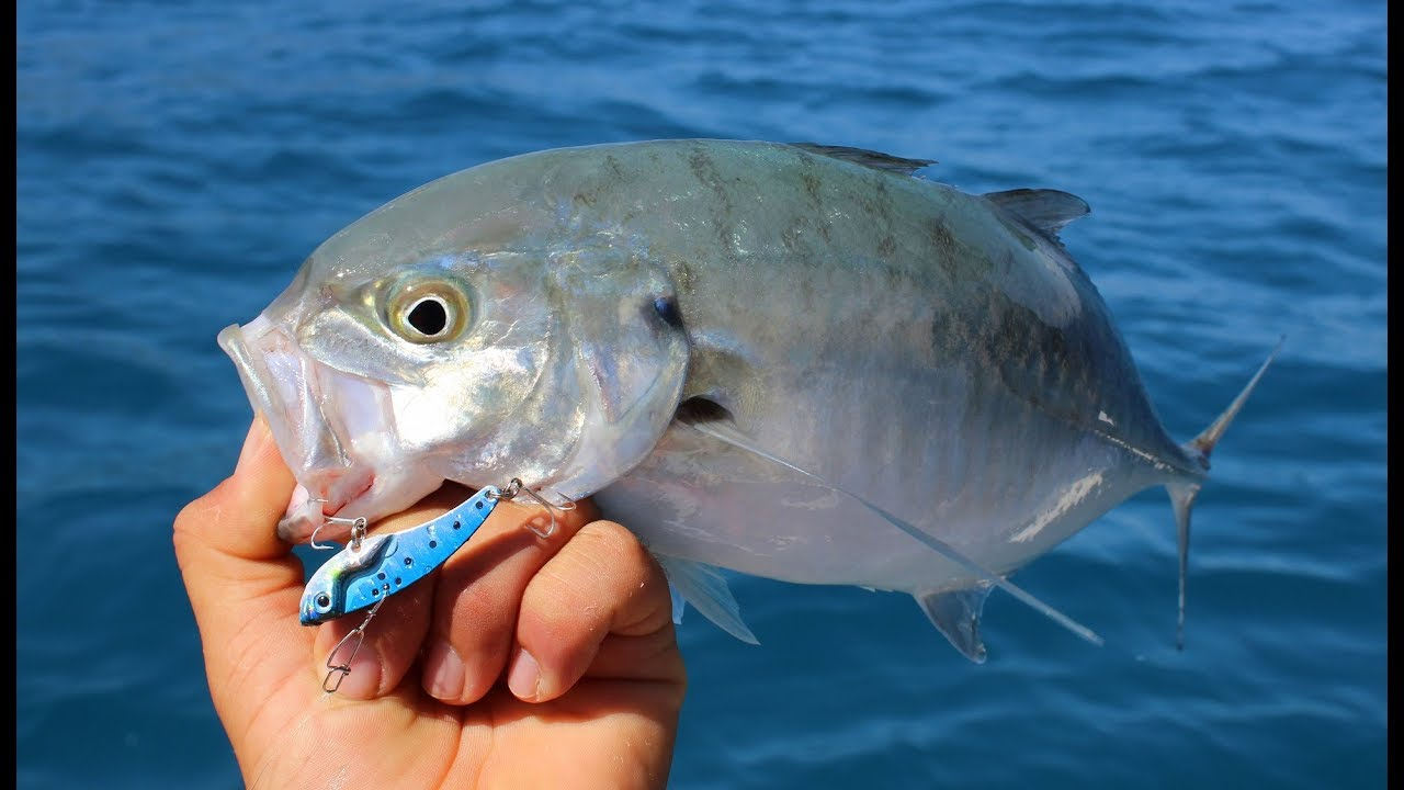Metal Vibasyon Yemi İle Sırtı Yaparak Güzel Balıklar Aldık