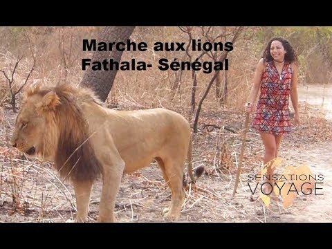 Marche avec les Lions de Fathala, Sénégal - Sensations Voyage #2