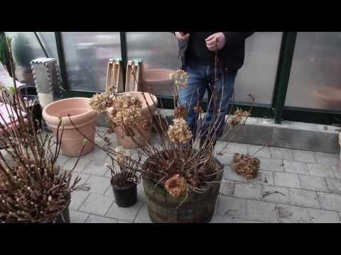 Купить крупномеры хвойные и лиственные, прайс-лист