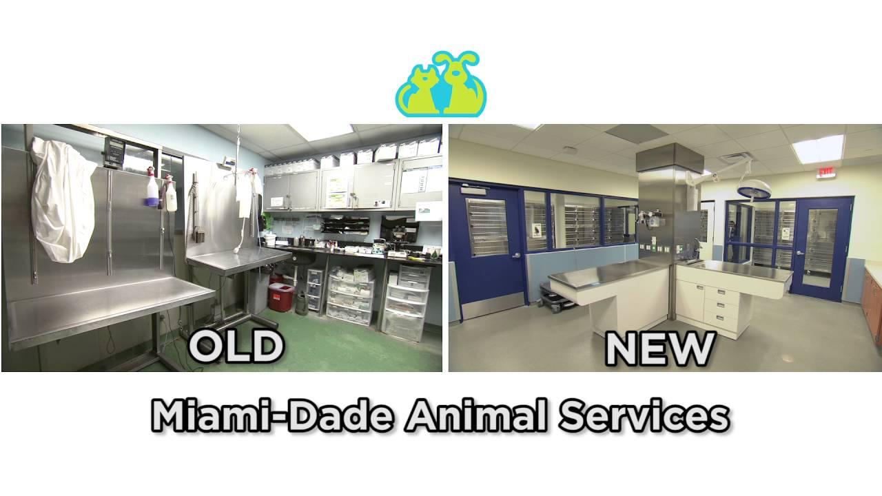 Pet Adoption Stockton