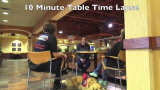 Golden Retriever Training To Be A Service Dog: Service Dog Trainers In Northern Virginia