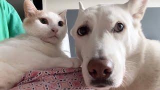 최첨단 ???를 처음 본 강아지와 고양이 반응ㅋㅋㅋ ㅣ 진돗개