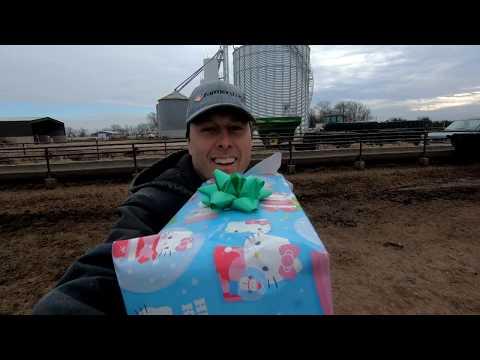 Cows get a robotic ball for Christmas