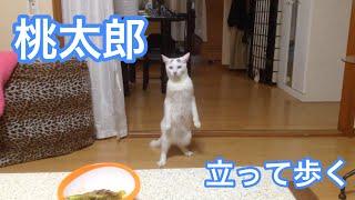 立ってバックする猫 thumbnail