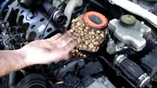 Une souris fait ses provisions dans mon moteur