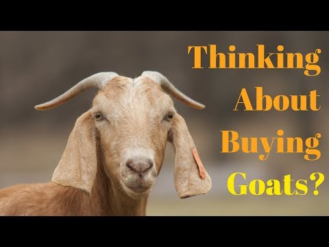 Things You Need To Know BEFORE Getting Goats