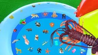 Animal Toys for Kids - Learn Sea and Wild Animal Names | Lum Sum Kids