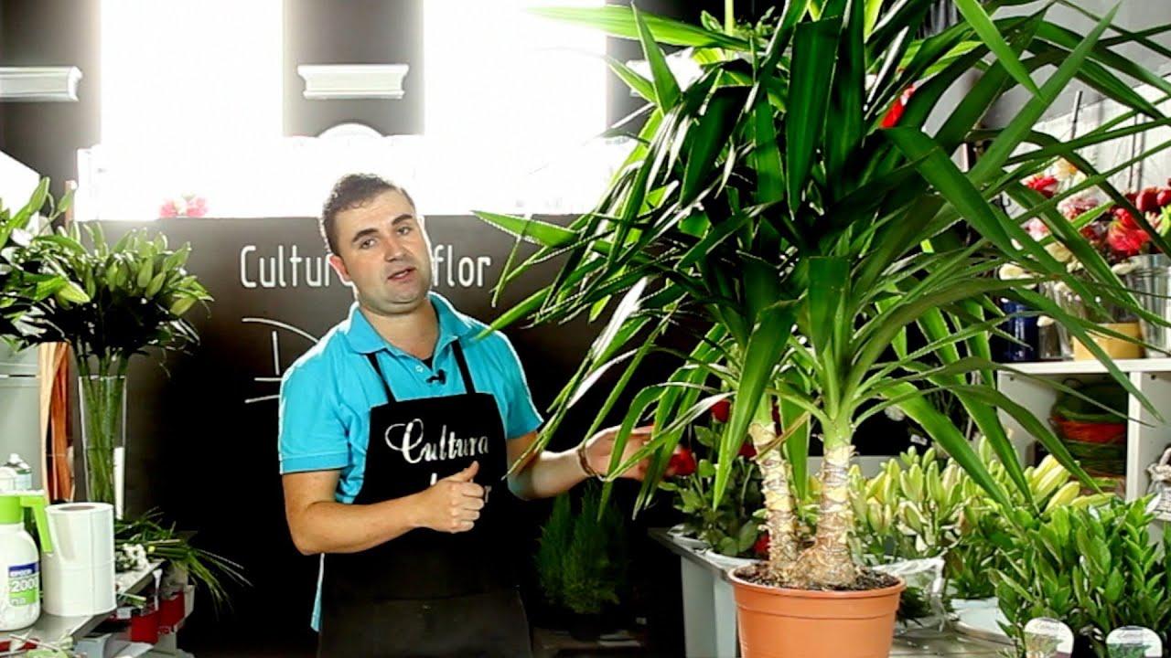 Cuidados de la yuca cultura de flor sapeando youtube for Planta yuca exterior