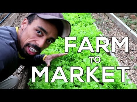 FARM To MARKET - Our first BIG order of the season!!