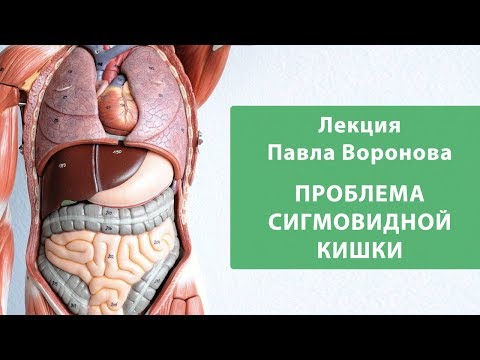 Взаимосвязи внутренних органов.Проблема сигмовидной кишки. Лекция Павла Воронова.