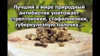 Лучший в мире природный антибиотик - уничтожает стрептококки, стафилококки, туберкулезную палочку...