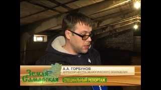 Производство биогумуса. Дождевые черви
