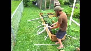 Finishing The Tomato Trellis