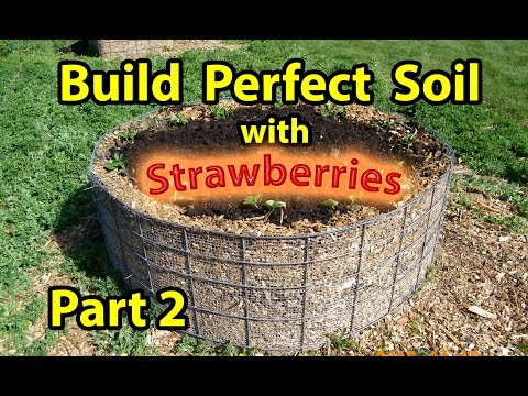 How to Build ( NATURE''S Healthy Soil ) in Raised Wood Chip Organic Bed Gardening – Designs – Part 2