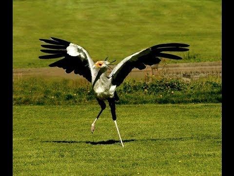Birds dancing very funny youtube - Funny bird pics ...