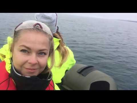 WHALE WATCHING - Akureyri  , Iceland  2016 ( Maria )