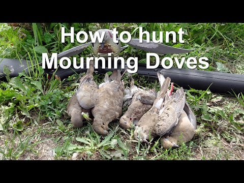 How To Hunt Doves In Canada For Beginners  - Part 2: Field Hunting  With Shotkam (giveaway Included)