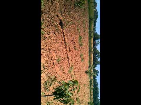 Vocnjak 2014 sljiva,kajsija,tresnja 1 hektar