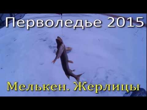Перволедье 2015. Ловля щуки на жерлицы. Небольшой видео - отчет от 21.11. 2015