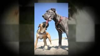 Bucks County, Pa Dog Training Services - Bob's Pet Stop, Inc