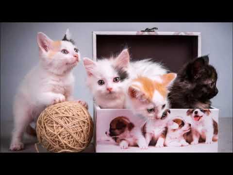 Самые популярные клички для котов и кошек The Most Popular Aliases For Cats Лучшие кошачьи имена