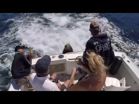 Cabo fishing 2016 youtube for Fishing videos 2016