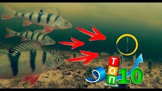 ТОП 10 Самых Лучших Атак Окуня на Балансир и Блесну - Зимняя Рыбалка