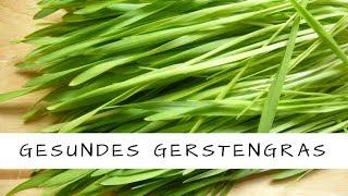 Gerstengras - ein geniales und gesundes Lebensmittel