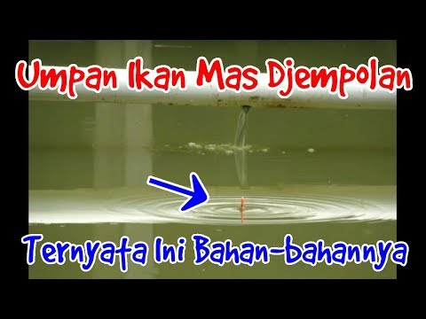 Umpan Ikan Mas Djempolan ( part - 1 )