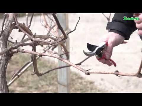 Как обрезать виноград весной видео для начинающих