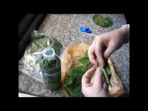 Как засолить виноградные листья для долмы на зиму видео