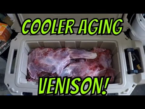 Cooler Aging Venison (on ice) 2019