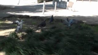 niftyデイリーポータルZのプープーテレビ2010年11月17日公開動画です。...