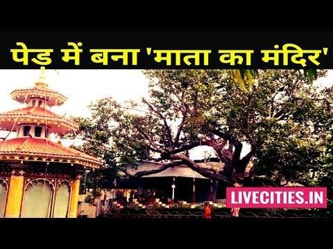 देखिये Patna में पेड़ में बना माता का मंदिर, बहुत है इनकी महिमा l LiveCities
