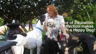 Dog Training |1800067710 |sunshine Coast |bark Busters