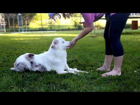 """Teaching """"down"""" with a deaf dog"""