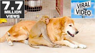 Monkey and Dog Friendship