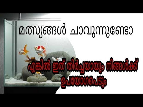 Fish Death In Aquarium|Reason|remedy|മത്സ്യങ്ങൾ ചത്തുപോവുന്നുണ്ടോ...|solution Un Malayalam