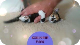КОШАЧИЙ ВЛОГ/ Пополнение в семействе/ Греция (Mila MyWay)(, 2016-10-07T11:30:01.000Z)