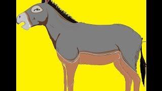 sonidos del burro -   donkey  sounds   -