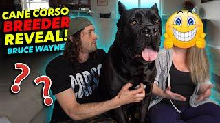Cane Corso BREEDER REVEAL Bruce Wayne's Breeder!
