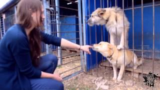 Неделя добра в ТюмГАСУ. Поездка в приют для животных