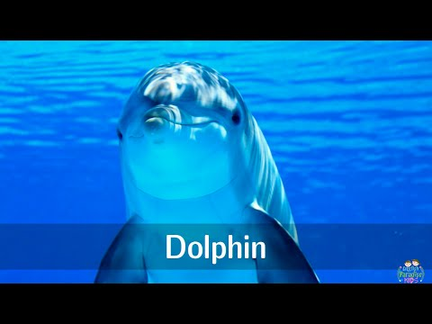 Marine animals pronunciation for children (with pictures)