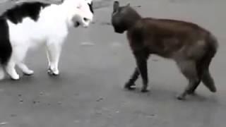 Кошки на тропе войны Кто кого РЖАКА