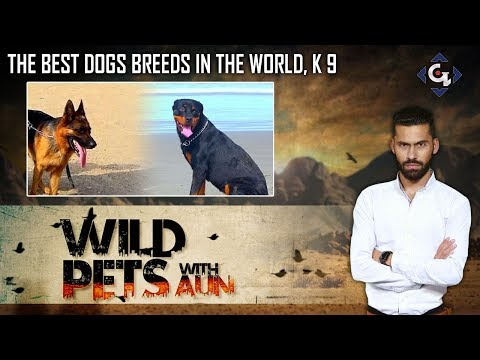 Best dogs breeds in the world, K9 | Wild Pets 2nd Episode