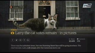 Между строк. Коты на службе Великобритании